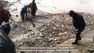 """Зарыбление. Рыбхоз """"Межура"""" (часть 2)."""