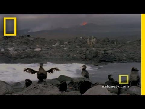 Galapagos | Exploring Oceans