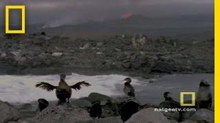 Exploring Oceans: Galapagos