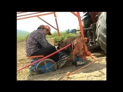 Planting Machine for Tobacco & Vegetables Asimonis-Kartel / Φυτευτική Μηχανή Asimonis-Kartel