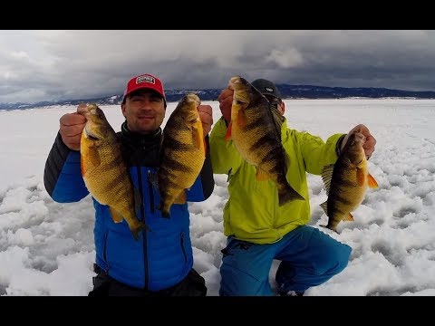 Cascade Lake Ice Fishing Giant Perch Outtakes
