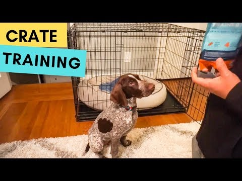 Introducing the CRATE to a puppy