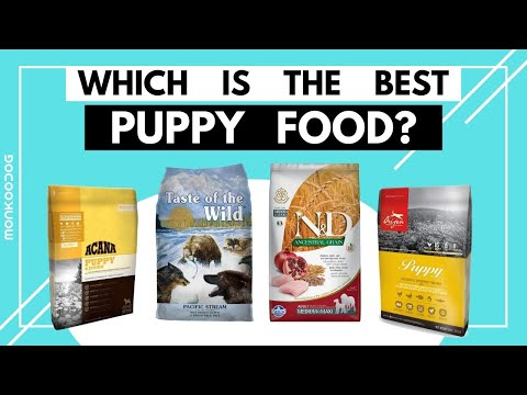Which is the World's BEST Puppy food of 2021. II Dry Puppy food review ll Monkoodog