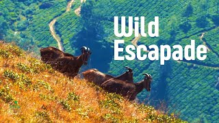Encounters with the Wild - Amazing Kerala