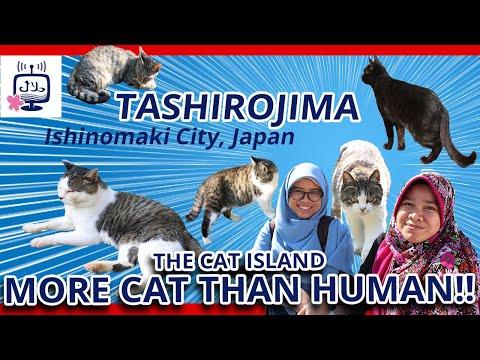 The Cat Island in Japan (Tashirojima): More Cat than Human Population!!! جزيرة القطط في اليابان