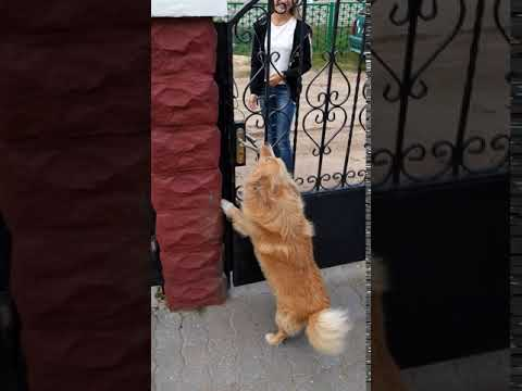 Smart dog Beam opens the door