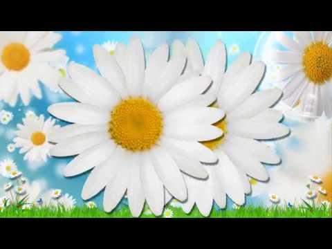 Baltās Margrietiņas - Kristīne Un Alvis