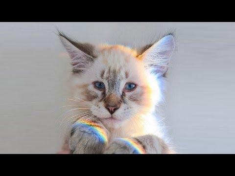 Синеглазый котенок оказался особенным за 12 сентября