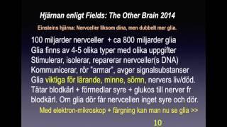 1) Hjärnan avgörande för allt lärande