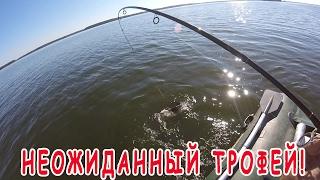 Рыбалка на судака летом. О приманках. Неожиданный трофей!