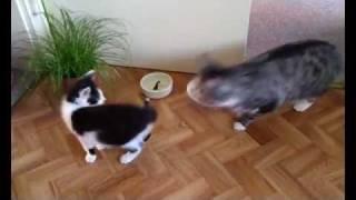 Zusammenführung zweier Katzen (Tag1)