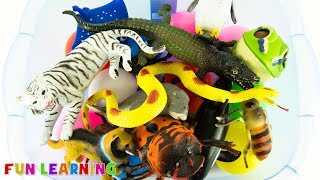 Wild Zoo Animals Toys Names and Learn Colors For Kids with Fun Box of Toys