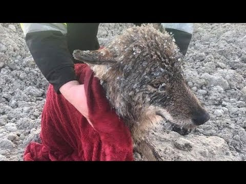 Man Rescues A 'Dog' From Ice And Realizes He Made A Huge Mistake