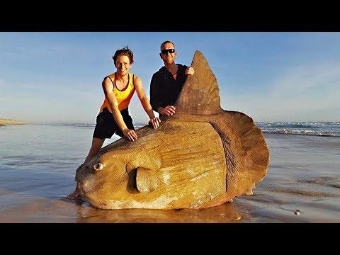 Это самая редкая из всех существующих рыб в мире снятых на камеру