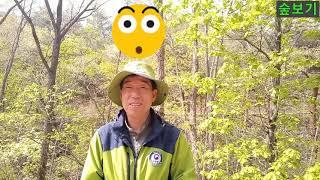 73.  #나뭇잎 은 왜 #녹색 일까? #숲보기 #숲해…