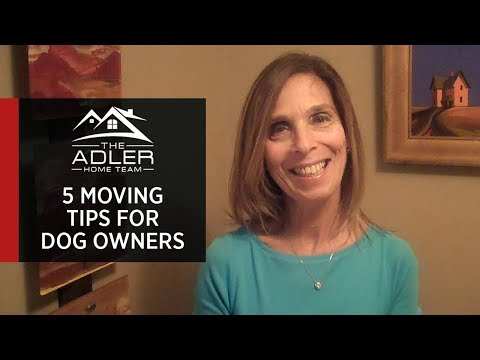 Northern New Jersey Real Estate: 5 Tips for Moving With Pets