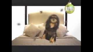 Cavalier King Charles Spaniel - Abac Canino - 101 Dogs - EspaÑol
