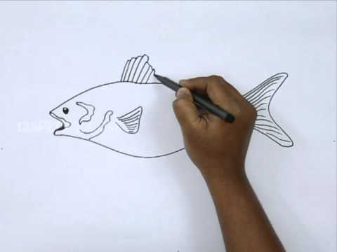 How To Draw A Bony Fish