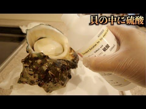 危険!!最強の貝に硫酸を入れて半日放置した結果。。。