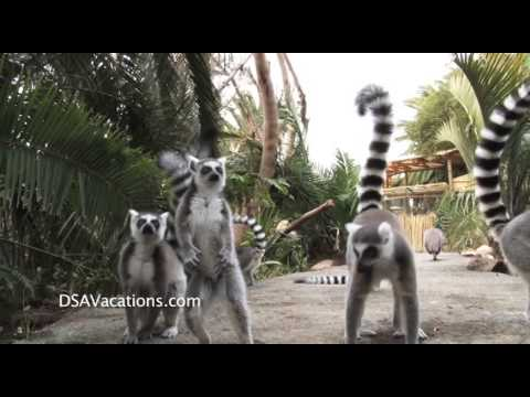Cango Wildlife Ranch Lemur Falls Travel With Kids South Africa
