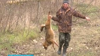 В Крымском районе открыли масштабную охоту на шакалов(В Крымском районе открыли масштабную охоту на шакалов. Их здесь развелось так много и они настолько осмелел..., 2015-02-17T09:43:32.000Z)