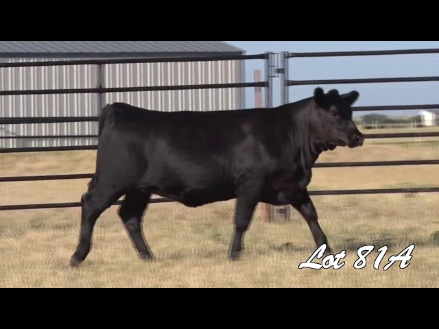 Pollard Farms Lot 81A