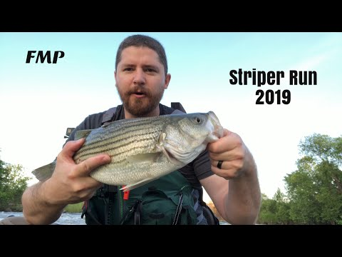 Striper Fishing On The James River