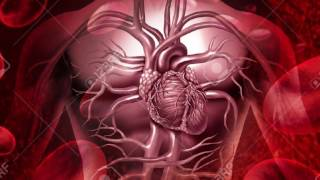 Анализы Крови: показатели ГОМЕОСТАЗА (лейкоциты/нейтрофилы/эритроциты/гемоглобин/СОЭ и др.)
