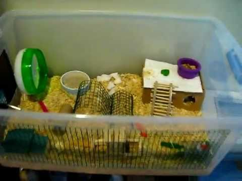 Ikea expedit hamster cage tutorial 2 cage layout doovi for Hamster bin cage tutorial