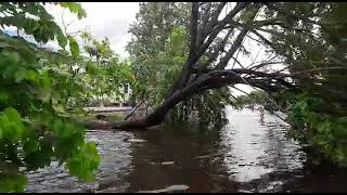 Download Pohon tumbang A.Yani KM.6