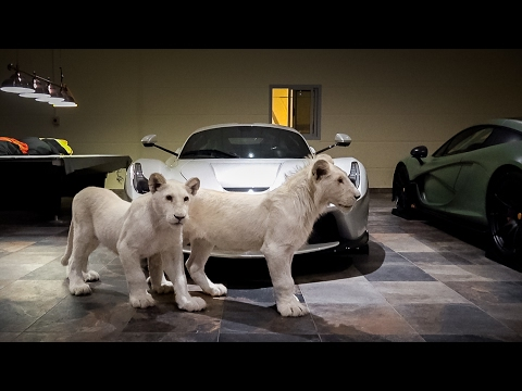 Rare White Lions & Supercars... Now I've Seen it All
