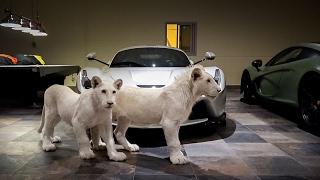 Rare White Lions & Supercars... Now I