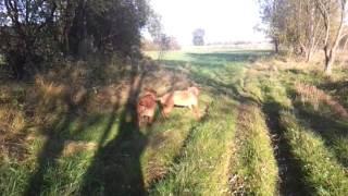 Jesienny Spacer Z Dogue De Bordeaux