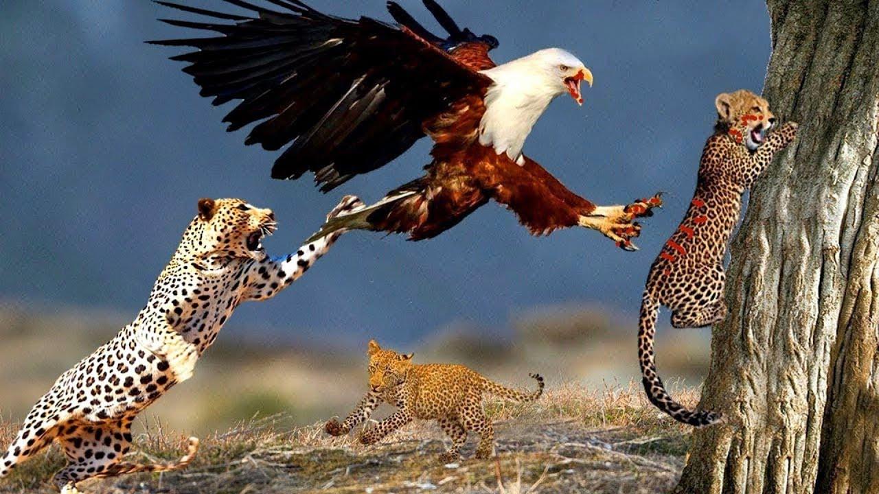 সিংহের সামনেই তার বাচ্চাকে নিয়ে উড়ে গেল | সবচেয়ে ভয়ংকর ৮টি পাখি || 8 Dangerous Birds In The World