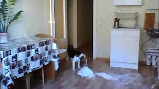 Плохая собака съела муку/ Bad Dog ate flour