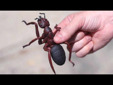 HUGE VENOMOUS ANT!