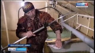 Фермер - Николай Фёдоров из Телегово считает, что в Северной Двине могут водиться осетровые