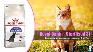 Корм для стерилизованных кошек и кастрированных котов от 1 до 7 лет · Royal Canin Sterilised 37