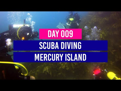 DAY 9 - Scuba Diving In The Coromandel - Mercury Island - New Zealand Travel