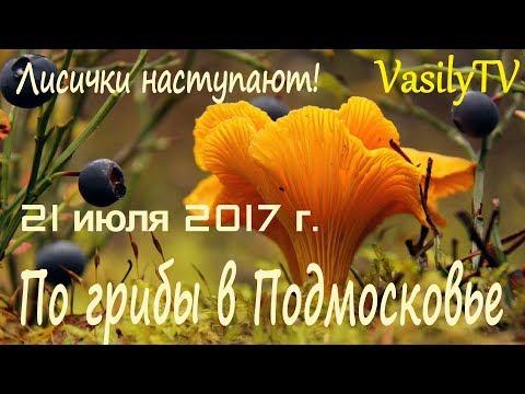По грибы в Подмосковье 21.07.2017