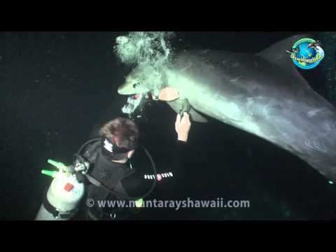 Dolphin Rescue Hawaii.mp4
