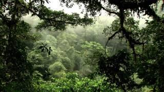 Водная жизнь - [13_26] Вода в джунглях