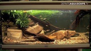 Biotope Aquarium Design Contest 2014 - The 4th Place, Eurasia
