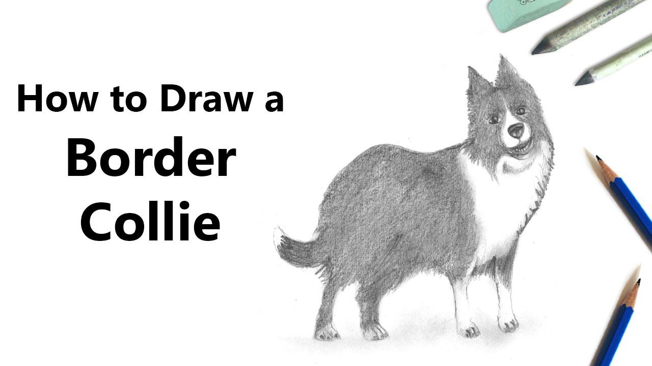 how to draw border collie with pencils time lapse