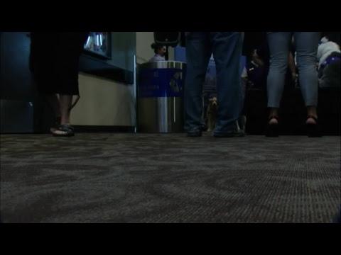 FULL: AIRPORT THERAPY PUPPIES! Navigator Pups at Phoenix Sky Harbor International Airport
