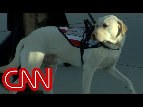 George H.W. Bush's service dog Sully travels with him one last time