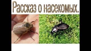 Презентация насекомые леса презентация 2 класс