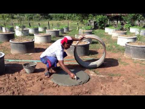 วิธีปลูกมะนาววงบ่อ
