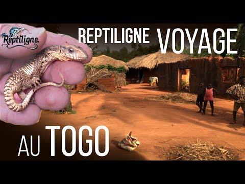 VOYAGE : Animaux sauvages et ferme d'élevage - Reptiligne au Togo !