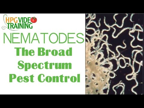 Nematodes: The Organic Broad Spectrum Pest Control -Beneficial Insects Series Part 4